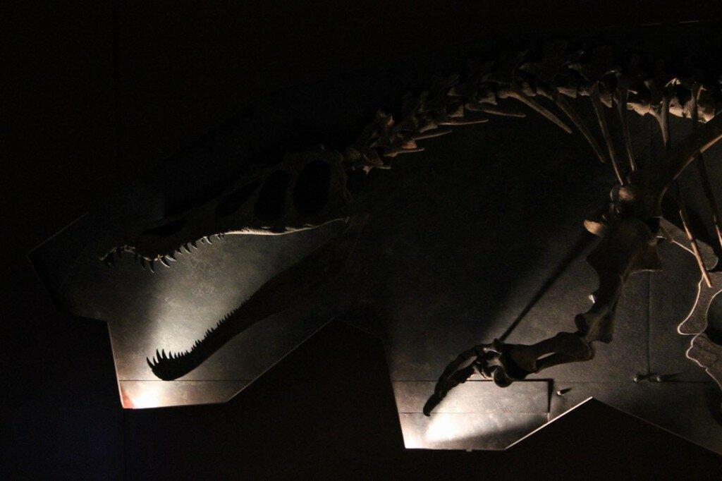 Por que visitar o Museu de História Natural de Londres