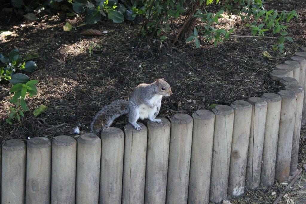 Há muitos esquilos circulando pelo parque