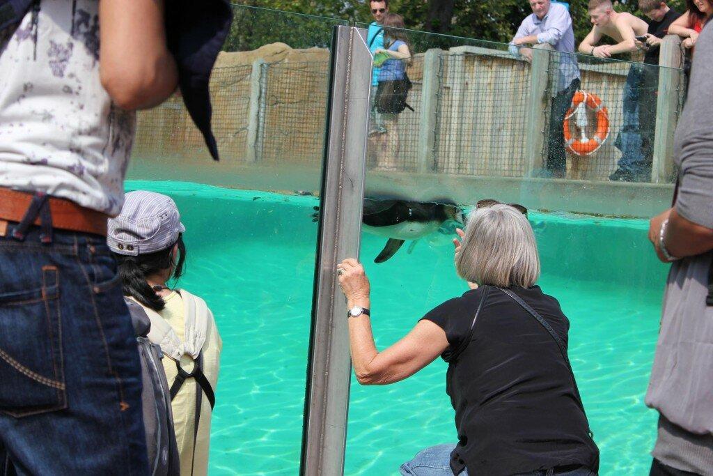 Conheça o London Zoo, o Zoológico de Londres