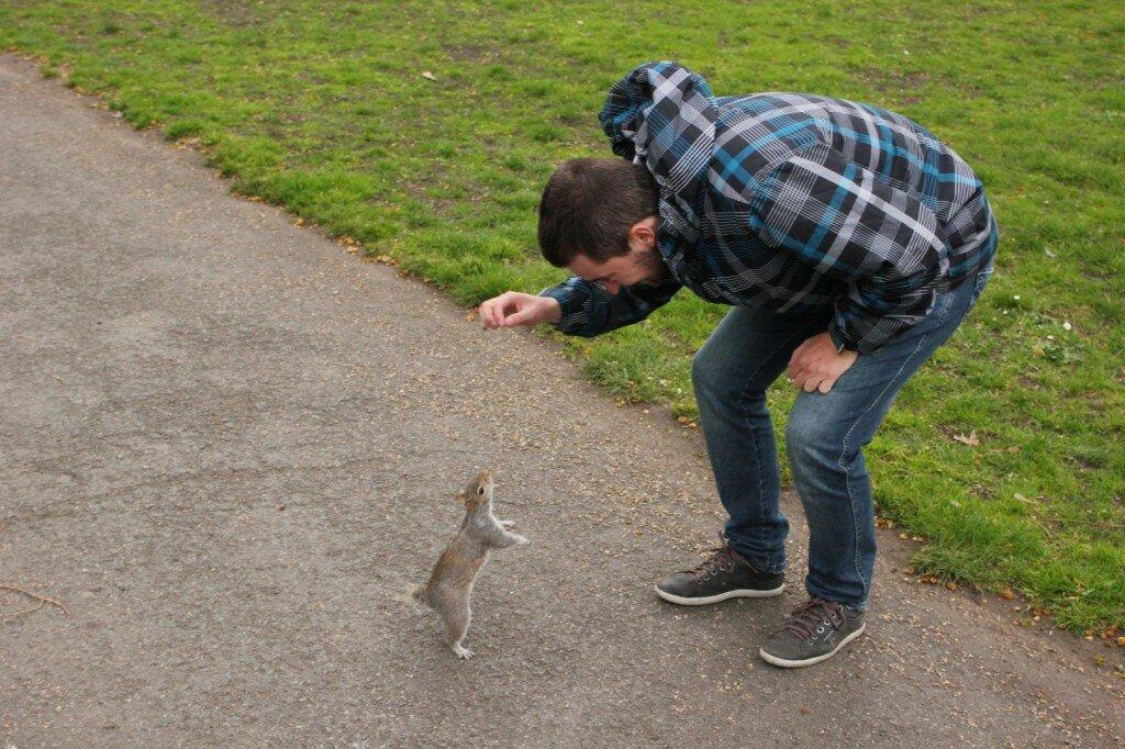 Esquilo no Green Park - Mapa de Londres