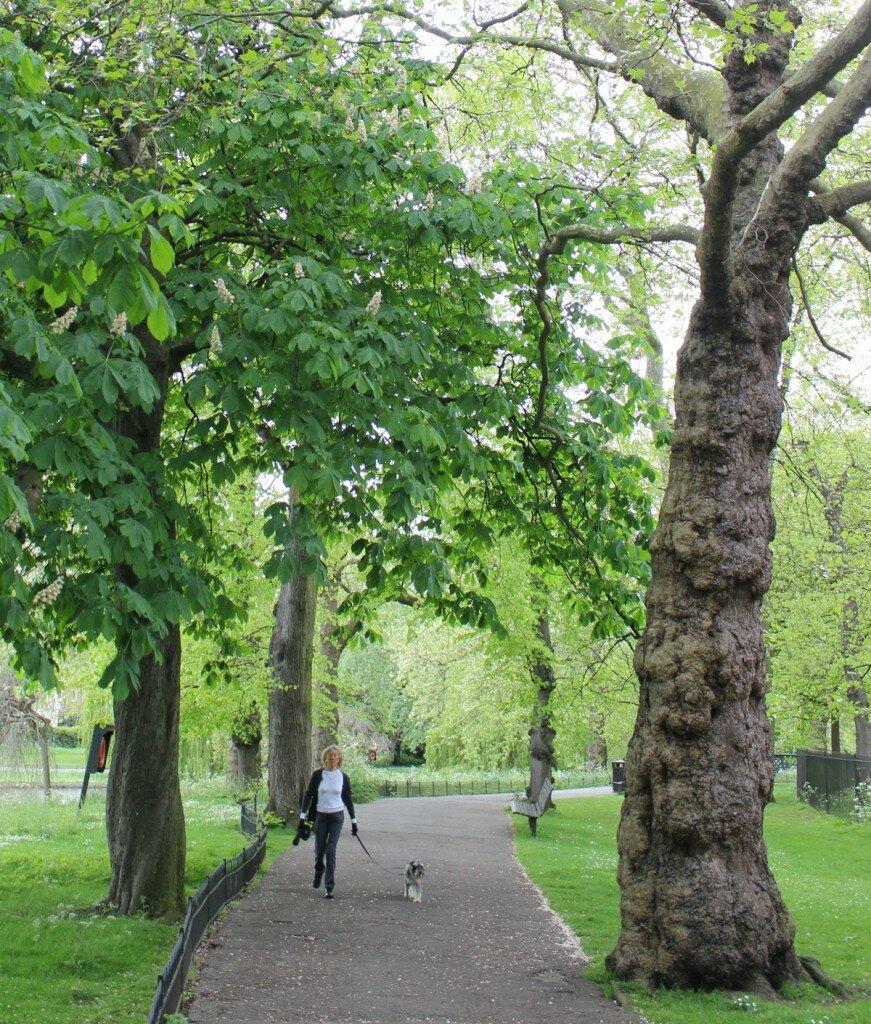 Parque Regent's Park - Animais de estimação - Londres