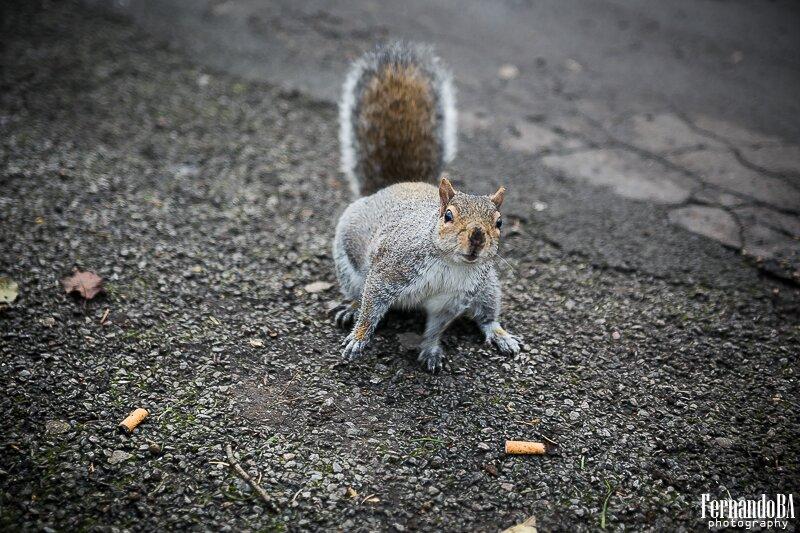 Esquilos - fotografo brasileiro Londres Europa (1)