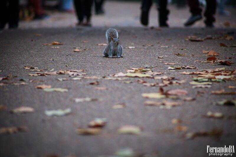 Esquilos - fotografo brasileiro Londres Europa (2)