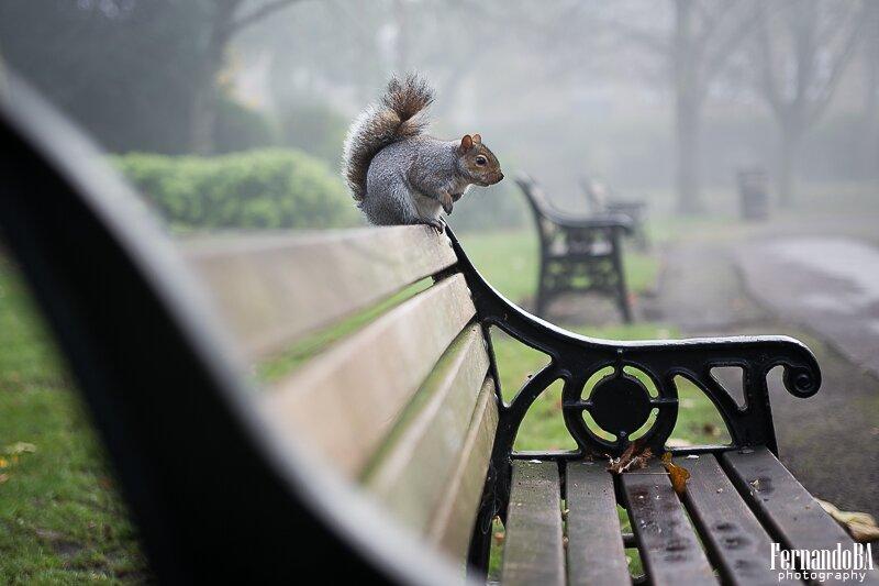 Esquilos - fotografo brasileiro Londres Europa (7)