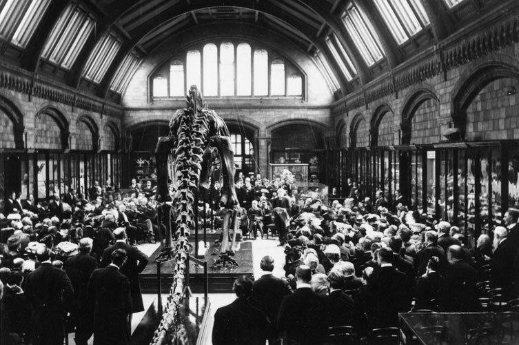 Chegada do dinossauro do Museu de História Natural de Londres